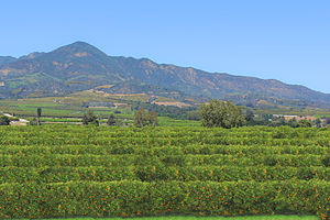 Economy of California - Orange Grove outside of Santa Paula