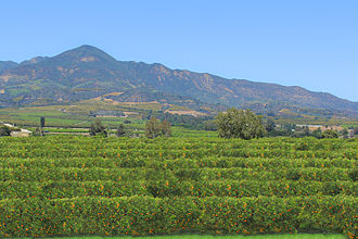 Ventura County, California - Orange Grove outside of Santa Paula, California.