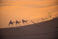 Camel Tour on Erg Chebbi riding across the dunes.jpg