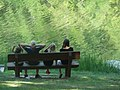 Camp Hosts (20469831258).jpg