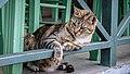 Cat in Paxos Island.jpg