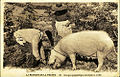 Caveurs de truffes dans le Gard.jpg