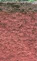 Cecil soil.PNG
