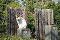 Cemetery cat - Gokokuji - Bunkyo, Tokyo, Japan - DSC07832.JPG