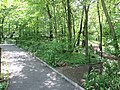 Central Park May 2019 55.jpg