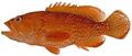 Cephalopholis fulva - pone.0010676.g048.png