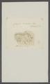 Cerapus tubelaris - - Print - Iconographia Zoologica - Special Collections University of Amsterdam - UBAINV0274 098 03 0007.tif
