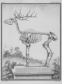 Cerf, squelette - Stag, skeleton - Gallica - ark 12148-btv1b2300253d-f20.png
