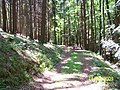 Cesta k přehradě-alibaba - panoramio (1).jpg