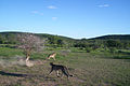 Cheetah Conservation Fund (5833476664).jpg