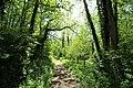 Chemin sous Vertcœur à Milon-la-Chapelle le 18 mai 2015 - 6.jpg