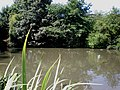 Cherry Burton Pond - geograph.org.uk - 1422066.jpg
