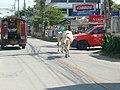 Chiang Mai street - panoramio - gary4now (1).jpg