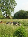 Chicken coops - geograph.org.uk - 462731.jpg