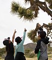 Children pointing at a Joshua Tree.jpg