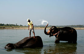 Chitwan Elephants bathing.jpg