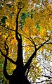 "Cincinnati - Spring Grove Cemetery & Arboretum ""Autumn Colors - Backlit"" (5103725795).jpg"