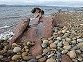 Cleiteadh buidhe, Machrie, Arran - geograph.org.uk - 1051516.jpg