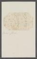 Cleodora spec. - - Print - Iconographia Zoologica - Special Collections University of Amsterdam - UBAINV0274 080 07 0012.tif