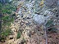 Cliff covered with many different mosses, lichens and grasses - 4.jpg