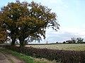 Clump Hill Farm from the Public Footpath - geograph.org.uk - 609940.jpg