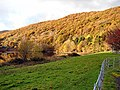 Coed Ty-llwyd - geograph.org.uk - 280159.jpg