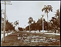 Collectie Nationaal Museum van Wereldculturen TM-60062350 Vijver met Victoria Regina waterlelies Jamaica W.A. Dunn (Fotograaf).jpg