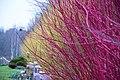 Colorful (explored 2016-12-13) - Flickr - Maria Eklind.jpg