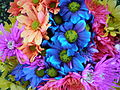 Colorful Crazy Daisies (4) (2530054799).jpg