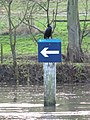 Cormorant on the post - geograph.org.uk - 1629362.jpg