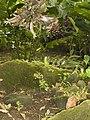Costa Rica (6109757115).jpg