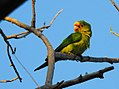 Costa Rica 2.DSCN7263-new (30322804913).jpg