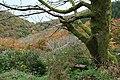 Countisbury, overlooking Coscombe - geograph.org.uk - 601210.jpg