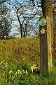 Cowslips on John Ray Walk - geograph.org.uk - 391012.jpg