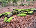 Crawfordsburn Glen (3) - geograph.org.uk - 664578.jpg