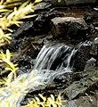 Creek in Early Fall (233655633).jpg