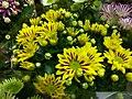 Crisantemo giallo.jpg