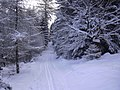 Cross country skiing trail Brdy1.jpg