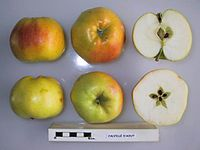 Cross section of Calville d'Aout, National Fruit Collection (acc. 1996-018).jpg