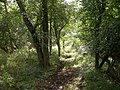 Croydon Old Lane - geograph.org.uk - 498032.jpg