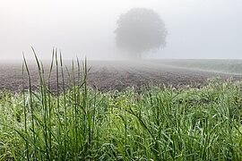 Dülmen, Kirchspiel, Nebel in der Bauerschaft Börnste -- 2021 -- 8090.jpg