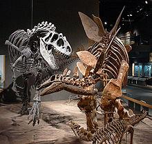 Simulação de um Alossauro atacando um Estegossauro em exposição no Denver Museum of Science and Nature.
