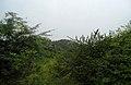 Deccan Scrub Forests at Mastyagiri 01.JPG