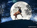 Deer in light of the moon - design by Toufik M. Amara.jpg