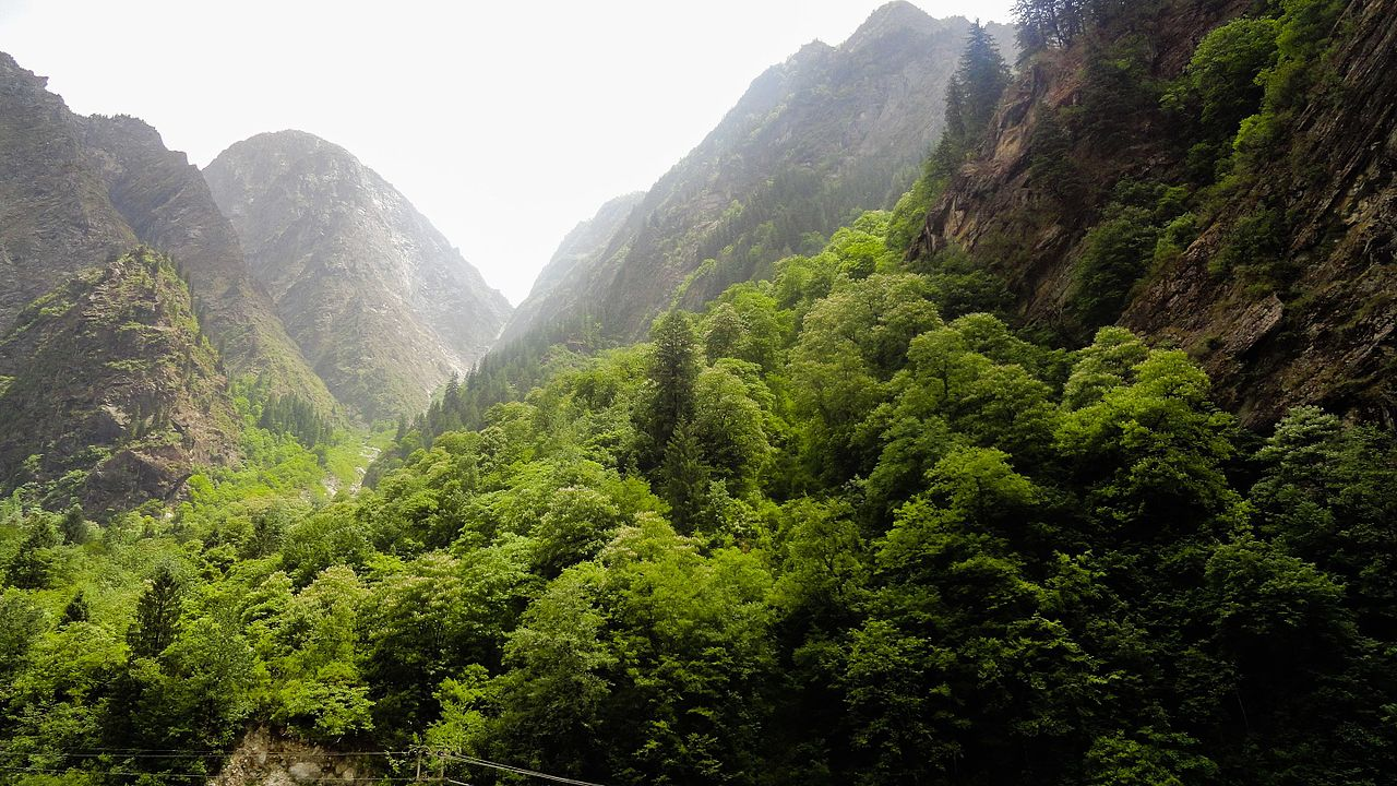 An Angheuol Story: The First Hunt 1280px-Dense_forest_in_himalayas