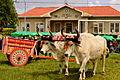 Desfile de boyeros en San Isidro de Heredia.jpg