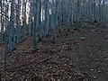 Diósjenő, 2643 Hungary - panoramio (8).jpg