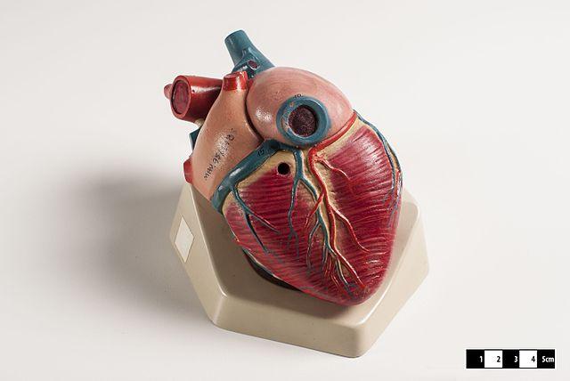 heart beats faster