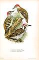 Die Vögel Afrikas (6425133621).jpg
