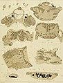 Die polycladen (seeplanarien) des golfes von Neapel und der angrenzenden meeres-abschnitte (1884) (20931857102).jpg